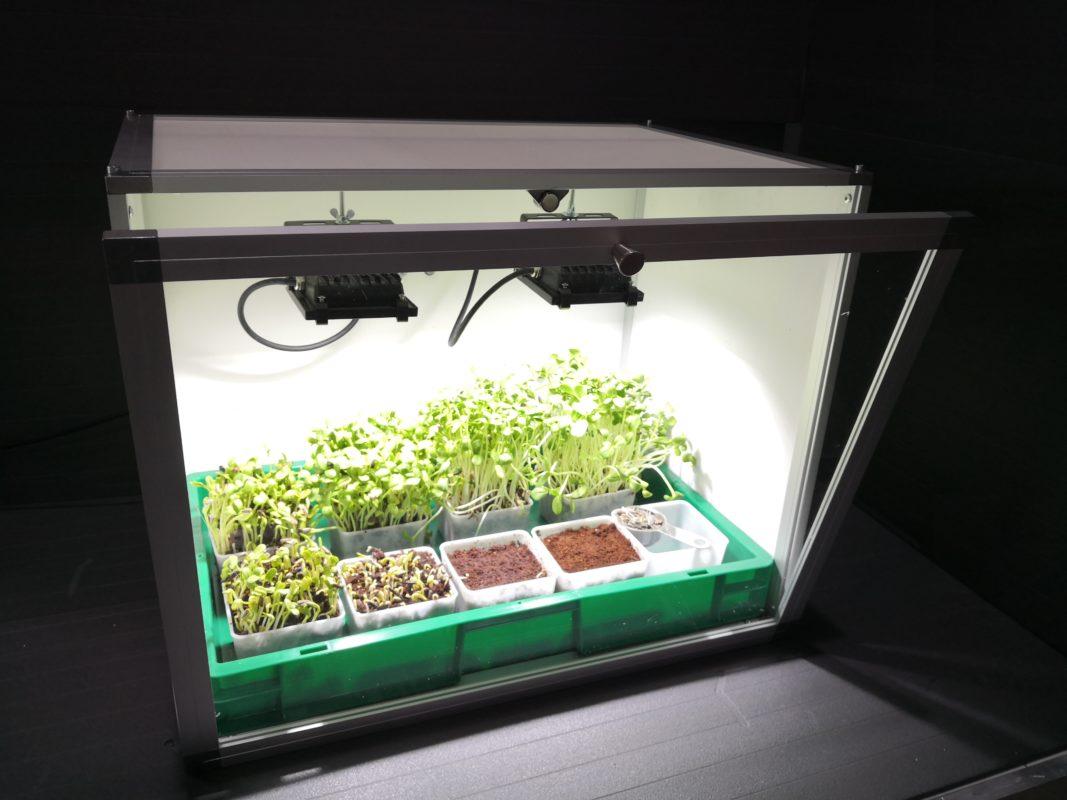microgreener